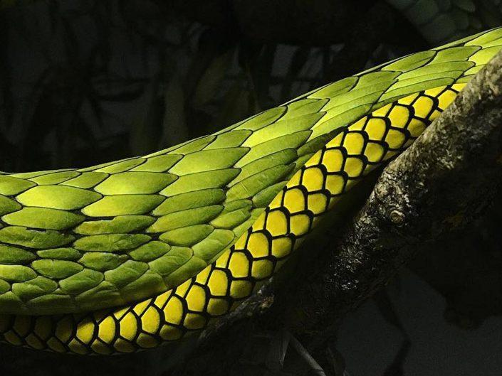 Čudesan svijet zmija